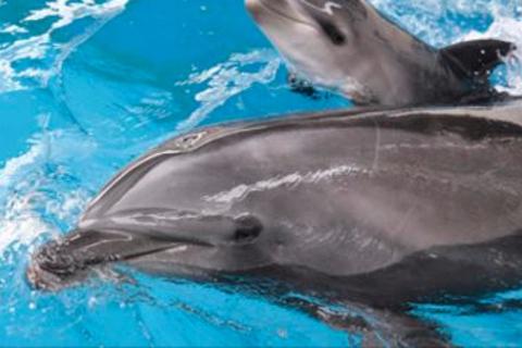 【終了しました】DRESSフォト部企画9月撮影会「新江ノ島水族館 ナイトワンダーアクアリウム撮影」