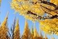 【終了しました】札幌DRESS部企画「スマホで秋景色を撮影! 私の知らない秋の北大」