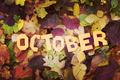 【10月誕生日占い】10月生まれの性格や生き方