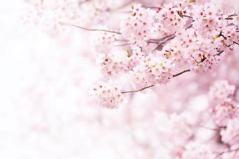新たな出会いに心が弾む 「DRESSお花見お茶会」開催レポート