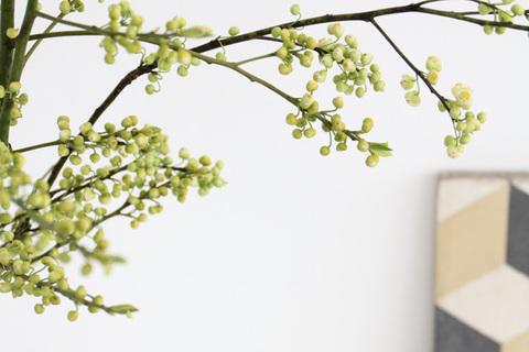 枝もので作る雰囲気のいい部屋と、雰囲気美人の共通点