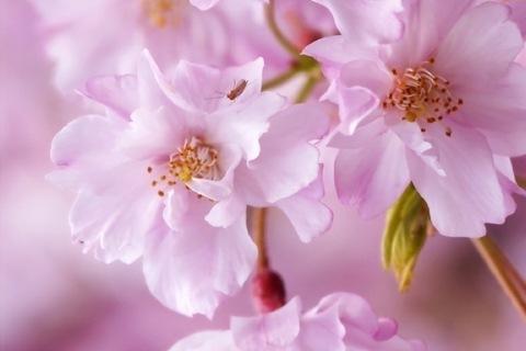 【終了しました】桜の季節はもうすぐ! ロングドレス部企画「ロングドレスお花見パーティ」