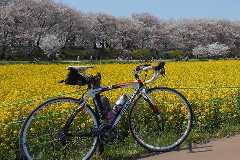 【終了しました】サイクル部企画「春の風を感じる、江戸川女子会Ride」