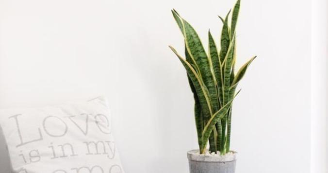幸運を呼び込む! 風水効果抜群の植物を元気にしよう