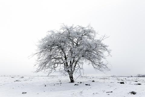 『奪い愛、冬』第1話あらすじ - 再会した元彼との禁断の恋、始まる!?