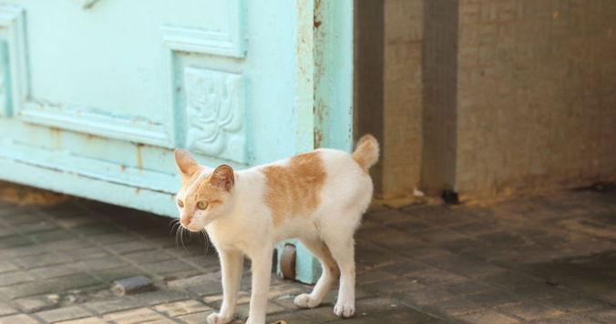 帰国前、プノンペンにて。カンボジアの豊かな文化を感じる