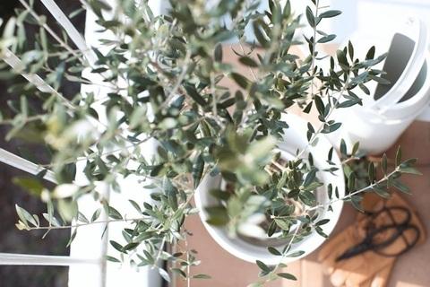 室内に植物を置いて、風水の恩恵を受けよう