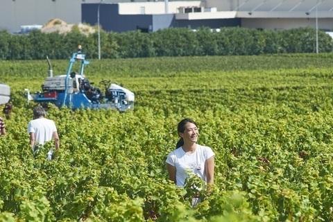 フランスでワインの名門ドメーヌ5代目当主となった日本人女性・ビーズ千砂さんの挑戦