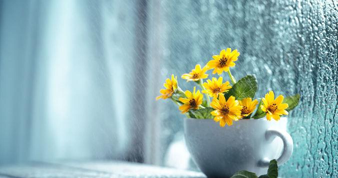 雨の日は窓を開けて。運気の流れが変わるから【風水開運術】