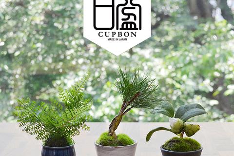 和モダンフェイク盆栽「CUPBON」をインテリアに。ECサイトもスタート
