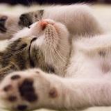 【心理テスト】サイコパス診断〜「捨て猫」への対応でわかる