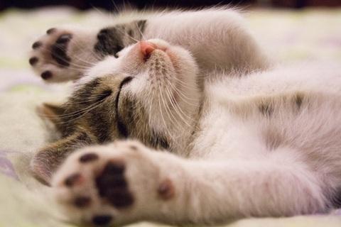 【心理テスト】サイコパス診断 「捨て猫」への対応でわかる空気読め度