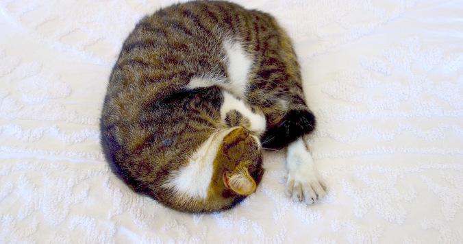 幸運を呼ぶ!? ヘミングウェイ家の6本指の猫たち