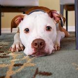 【心理テスト】一途さを表す「犬っぽさ」診断