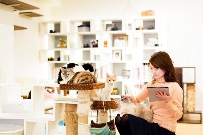 医学的にも癒し効果が話題!「猫カフェ」 【アンチストレスSPOT】