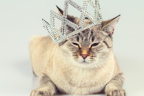 【心理テスト】あなたの中に眠る「女王様気質」を診断