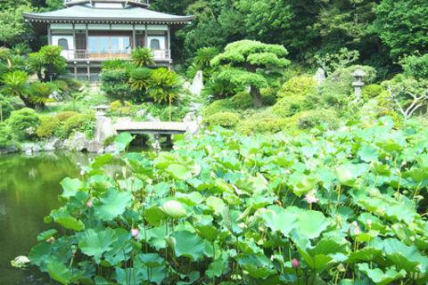DRESS部活レポート7月のフォト部は鎌倉観蓮会!