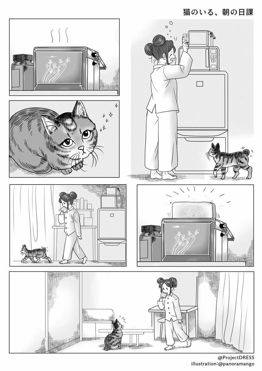 猫のいる、朝の日課