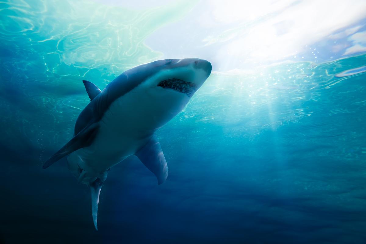 6.サメが出てくる夢