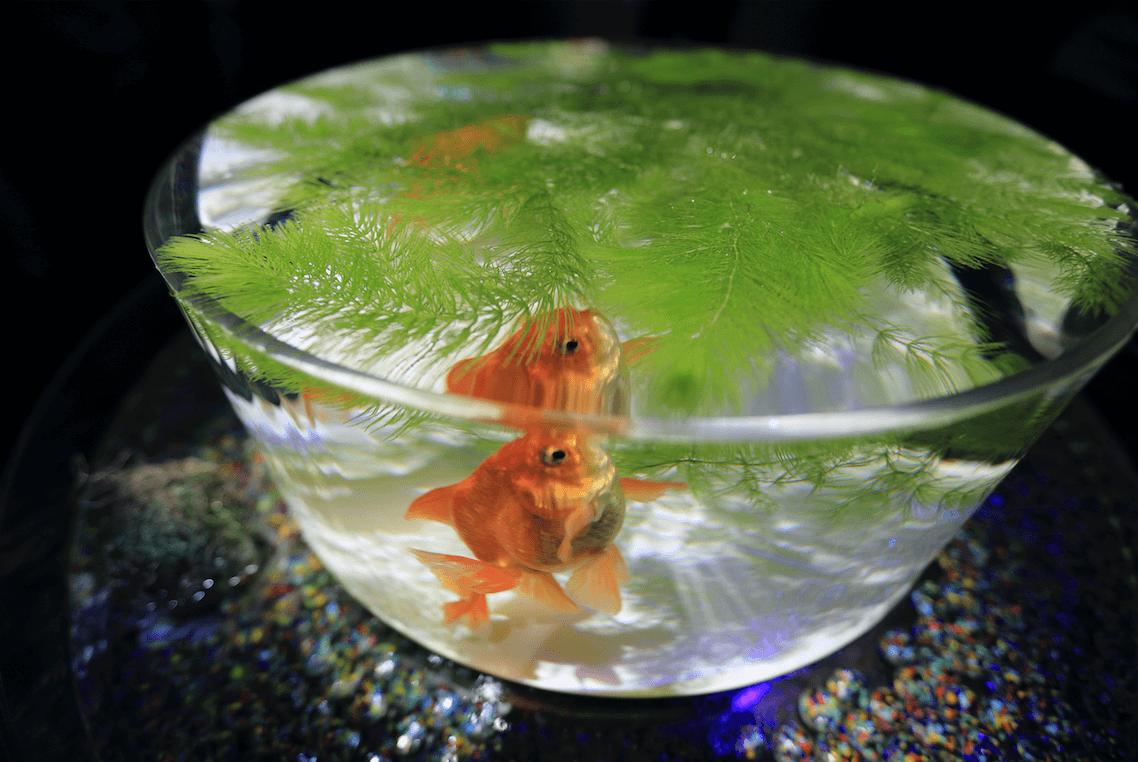 室内を快適に過ごす暑さ対策便利グッズ 金魚